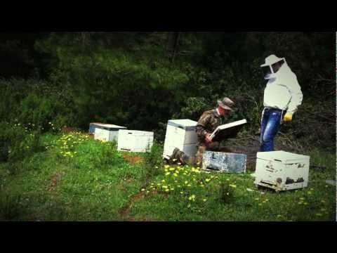Η Stayia Farm είναι μία μελισσοκομική επιχείρηση με εξαιρετικής ποιότητας μέλι και πελάτες της τα πολυτελή παντοπωλεία της Ευρώπης.