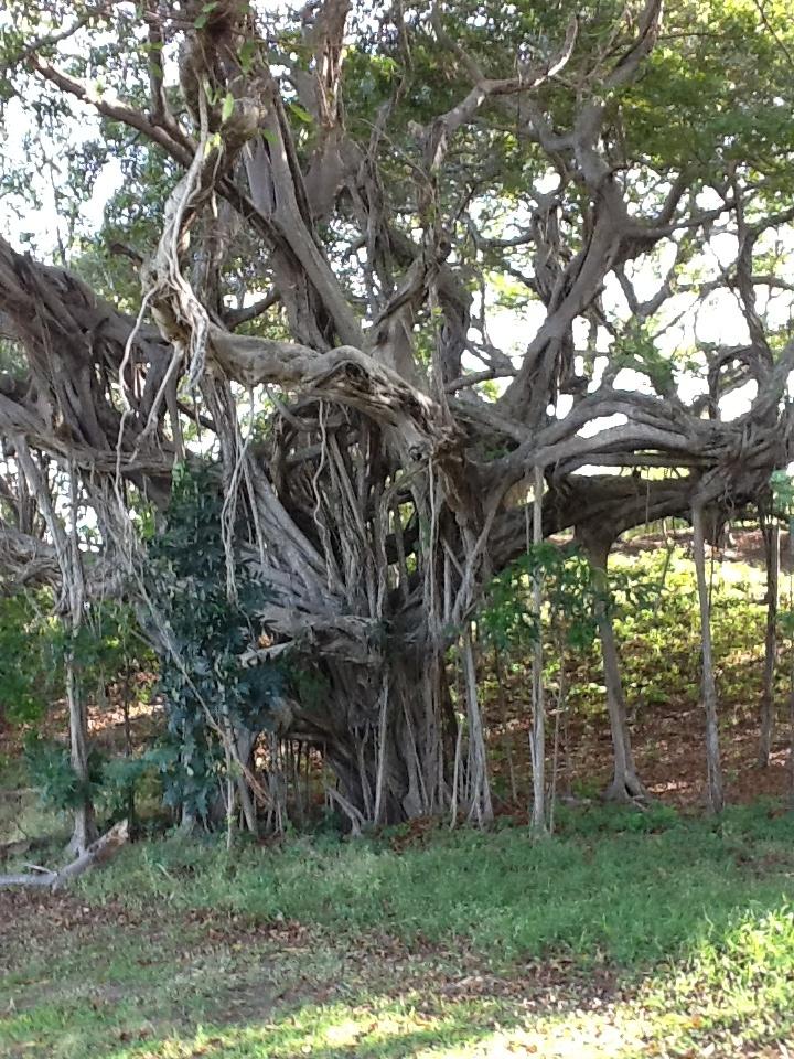 16 best Mother Nature Network-mnn images on Pinterest ...