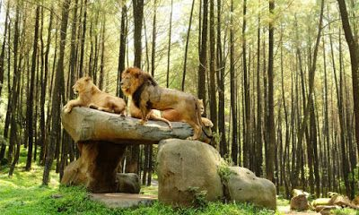HTM Taman Safari Prigen