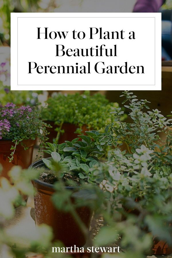 How To Plant A Beautiful Perennial Garden Perennial Garden