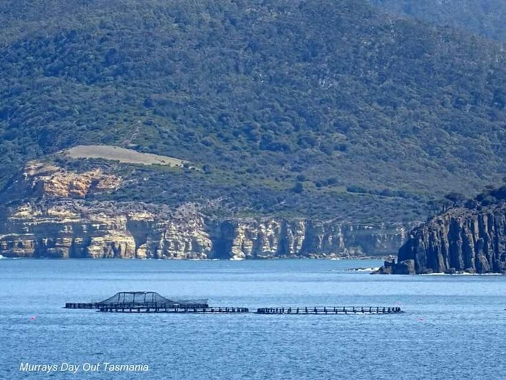 Salmon ponds near Nubeena photo credit to Murrays Day Out Tasmania