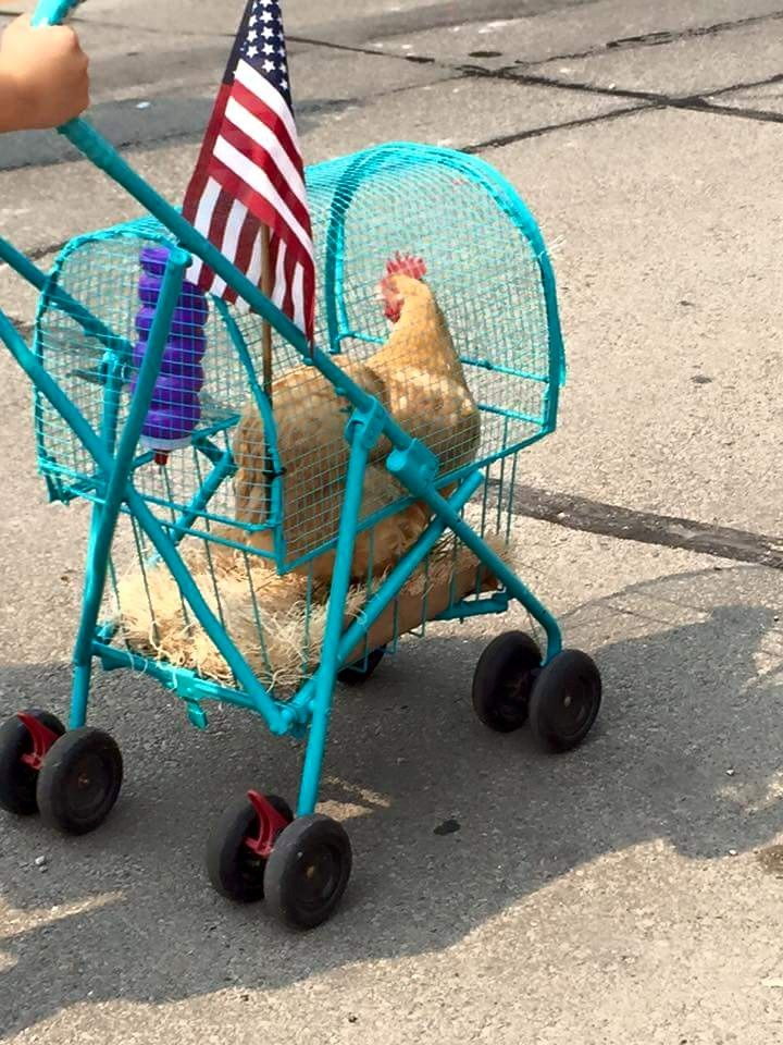 That can totally be me a year from now, pushing a chicken stroller. Haha!