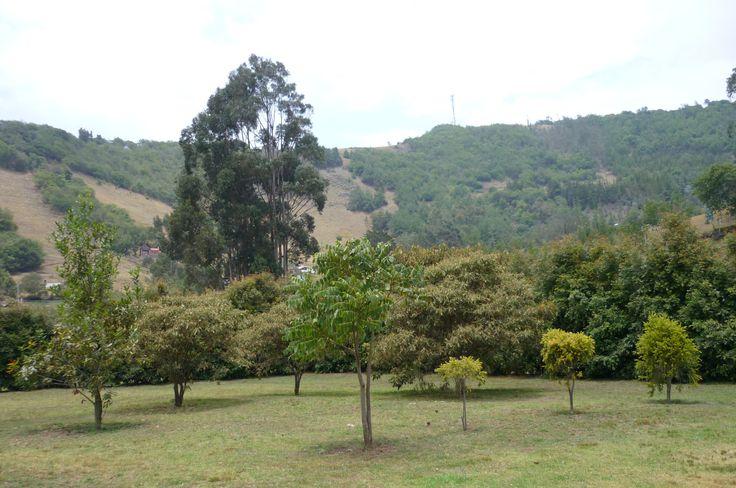 Vendo Hermosa Casa en Suesca - Cundinamarca  $740.000.000 área 15.518m2 Cel. 3144204021