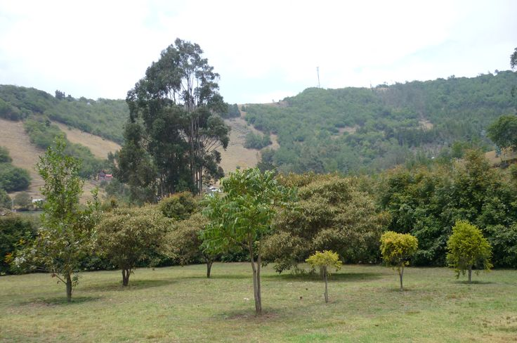 Suesca - Cundinamarca Cel. 3144204021