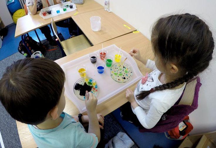 Na zajęciach Klubu Młodego Odkrywcy, dzieci hodowały kolorowe bakterie. W eksperymencie wykorzystaliśmy różnice w gęstości wody i oleju oraz fakt, że substancje te nie mieszają się ze sobą. #klub#młody#odkrywca#doświadczenie#bakterie#eksperyment#montessori