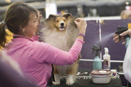 Ежегодная выставка собак в Нью-Йорке