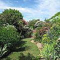 Mon jardin de roses anciennes