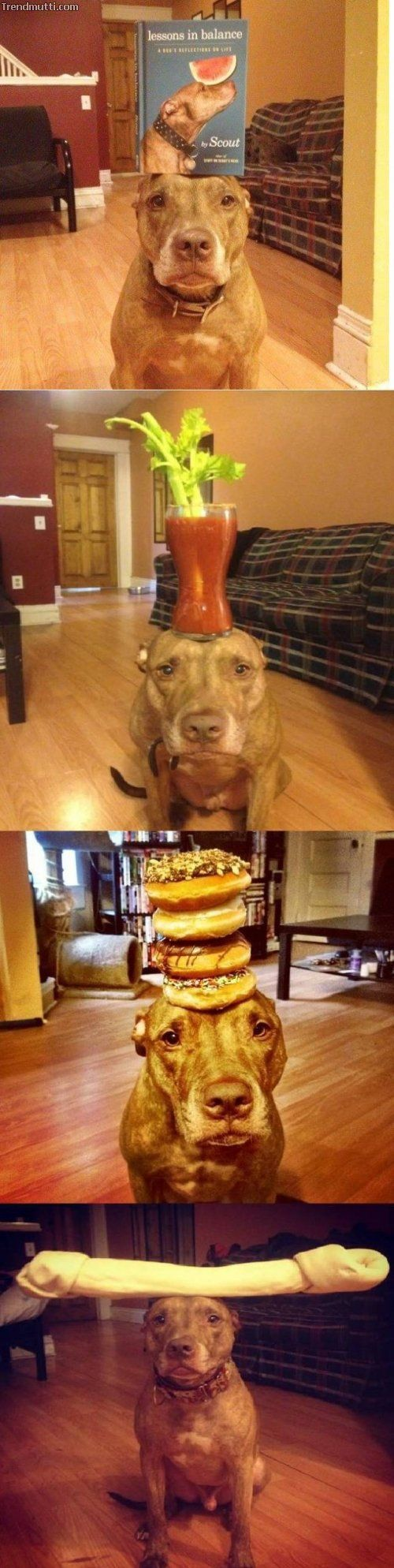 Today funny pictures (08:28:46 PM, Thursday 05, January 2017 PST) – 19 pics #funnydoglaughter