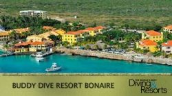 Voted the #1 Dive Resort in the World by Scuba Diving Magazine's Readers Choice Awards 2013, Buddy Dive Resort Bonaire is the place for your next dive vacation! With friendly and professional Divemasters and Instructors, a fleet of five comfortable dive boats, fully equipped rental trucks and unlimited air or Nitrox -‐ Buddy Dive makes it easy to explore more than 86 award-‐winning dive sites reachable by shore or boat in Bonaire & Klein Bonaire.