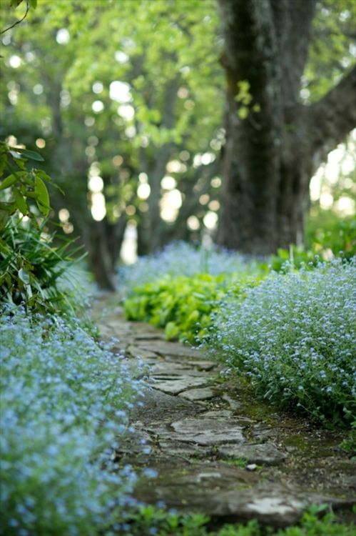 Path laden with forget-me-nots.