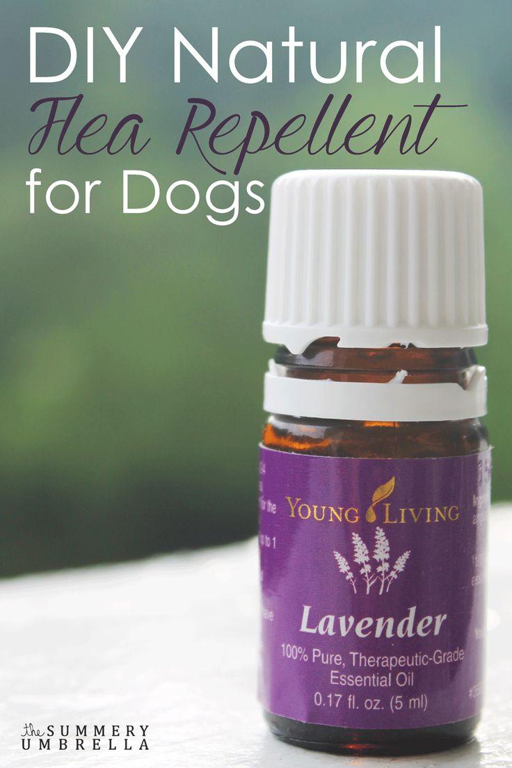 Hond masseren met olijfolie met twee dr essentiële lavendelolie, om de dag. Ook wat druppels in drinkwater en in de hondenmand. Geen vlooien meer, niet meer krabben en een rustige hond :)