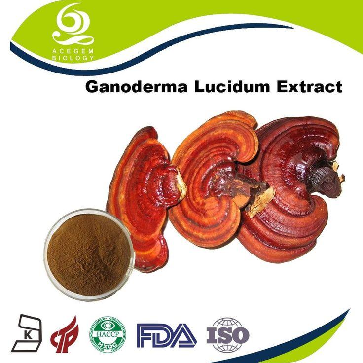 Reishi Spore Powder Ganoderma Lucidum Extract Ganoderma P. E. For Sale