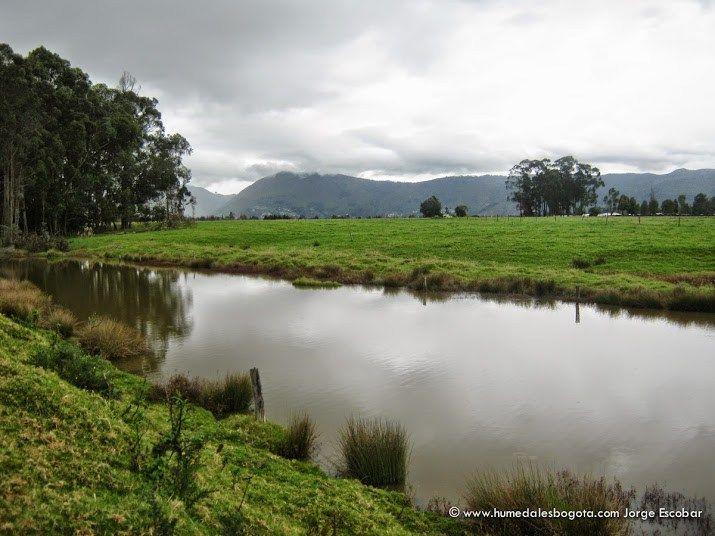 Ver Humedales Bogotá en un mapa más grande  Por el momento solo tenemos en cuenta los 62 humedales inventariados, el borde norte de la ciudad, cuenta con 24 de ellos, son aproximadamente el 38,7%  de todos los ecosistemas de humedal de Bogotá, adquiriendo una gran importancia para la conectividad ecológica, la adaptación al cambio climático y la salud de nuestro territorio.  Este inventario de humedales entra a nutrir la ya importante lista de ecosistemas que conecta la Reserva, entre lo...