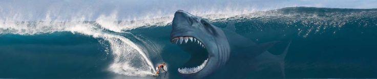 megatooth shark   The extinct Megalodon shark still mystifies millions with it's huge ...