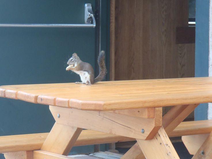 """""""I knew I left that nut somewhere..."""""""