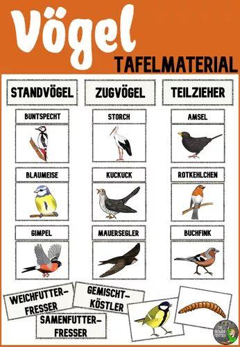 Vögel Im Winter Grundschule 1. Klasse