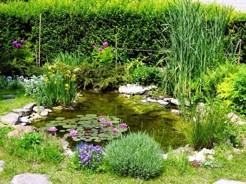 le bassin de jardin de Jean Yves