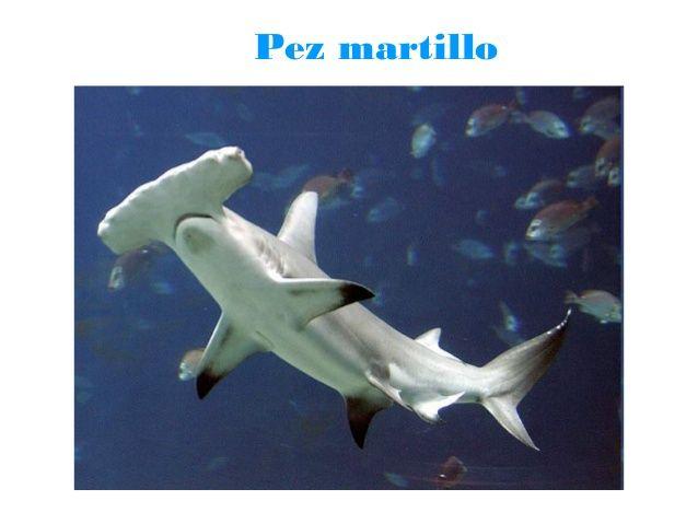 Proyecto El Mar En Infantil Fotos De Peces Especies De Tiburones Ecosistema Marino