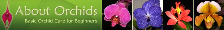 About Orchids: Basic Orchid Care for Beginners - Home