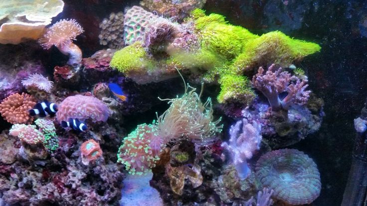 seewasseraquarium-1.jpg 1.328×747 Pixel