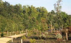 Bosques mediterráneos. Los Bosques Templados Submediterráneos. Esta área alberga distintos tipos de robledales y bosques mixtos de caducifolios