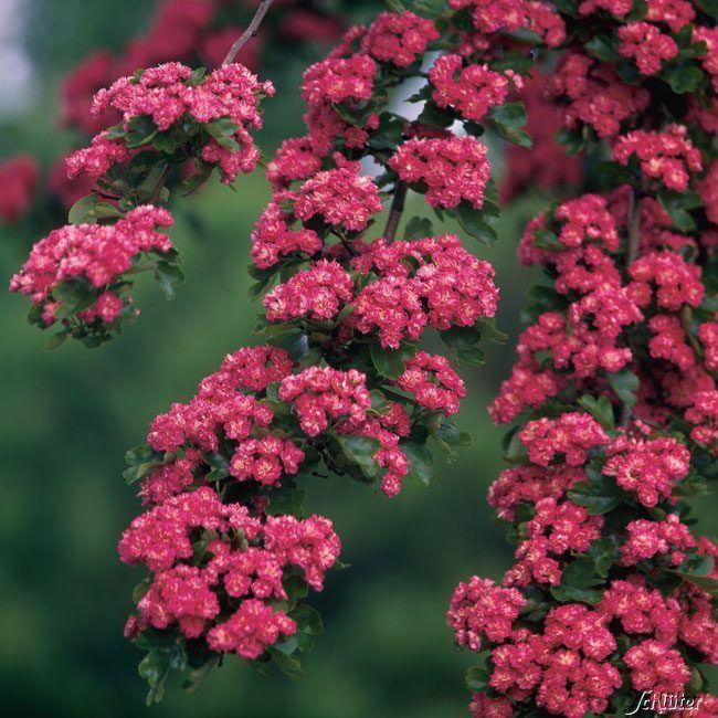 24 best wunderschöne frühlingsblüher – mit diese gartenpflanzen, Garten Ideen