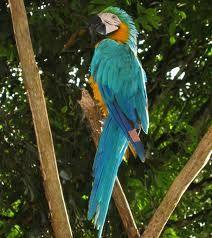selva amazonica - Google Search