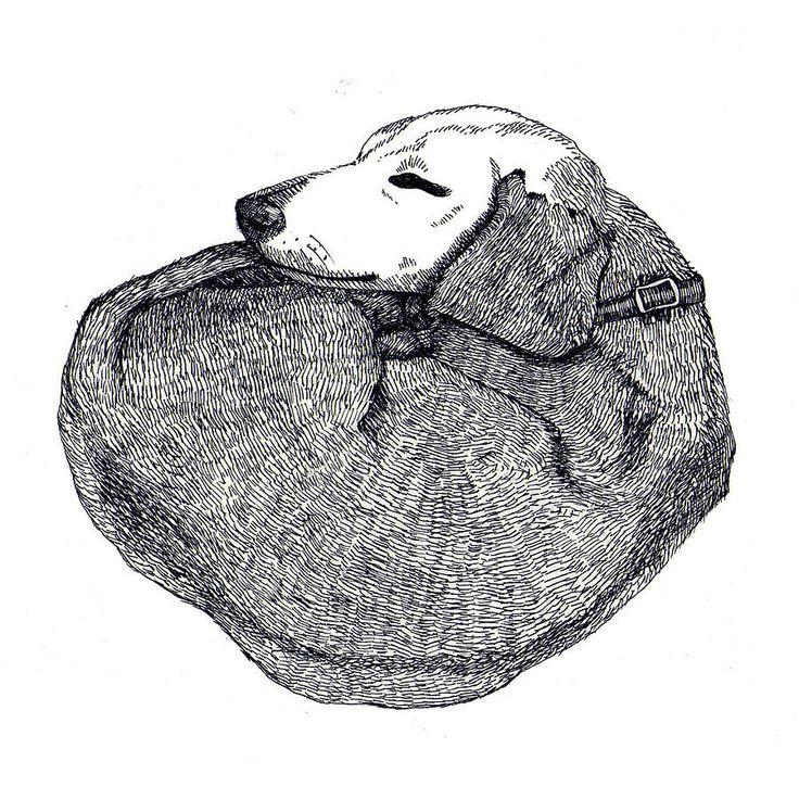 sleeping dachshund print by made by menna | notonthehighstreet.com
