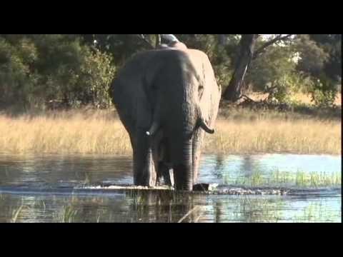 Botswana,Podróże marzeń, wersja HD, filmy-lektor.pl, cały film, filmy z ...