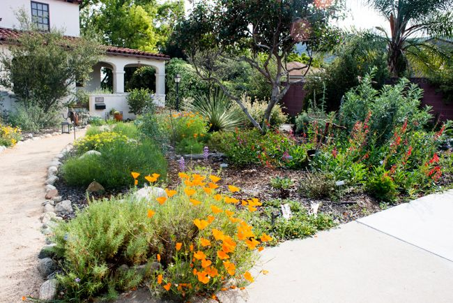 Best 25 california native garden ideas on pinterest for Gardens in southern california