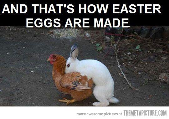 funny bunny pictures | Wednesday funnies! - Sharenator.com