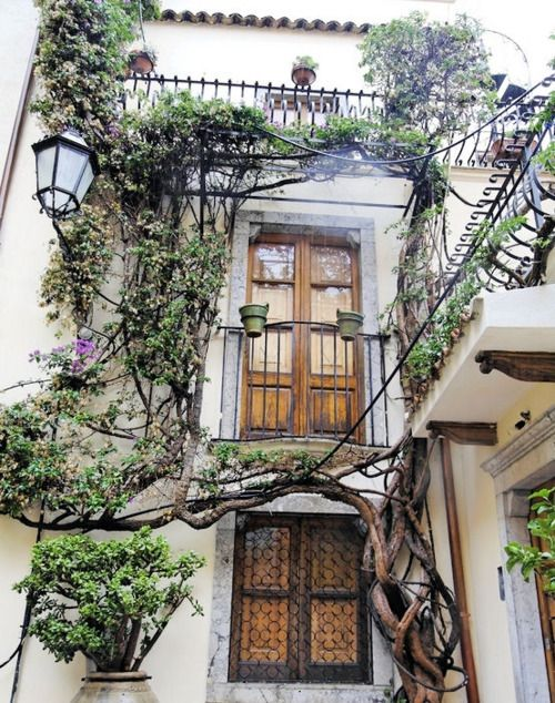 wow: Favorite Places, Window, Sicily Italy, Vines, Balconies, Pools House, Trees, Taormina Sicily, Woods Doors
