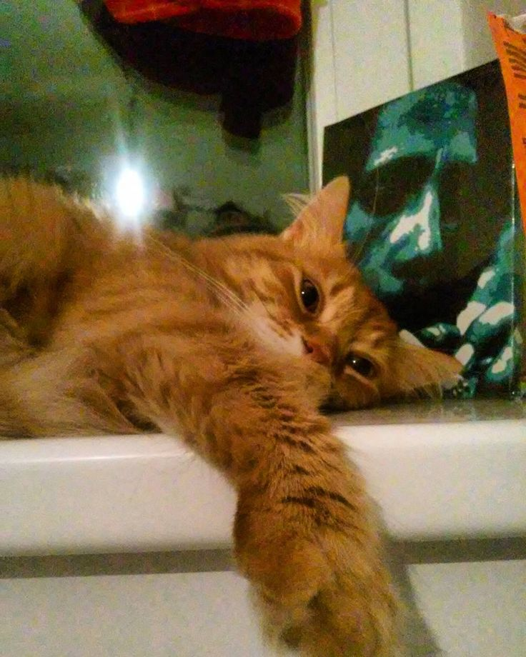 """#cat #red #redcat #Gyilkos #BobMarley #Marleycat #lion #rasta #rastafari #rastalion #rastacat #smoke #smokeweed #weed"""