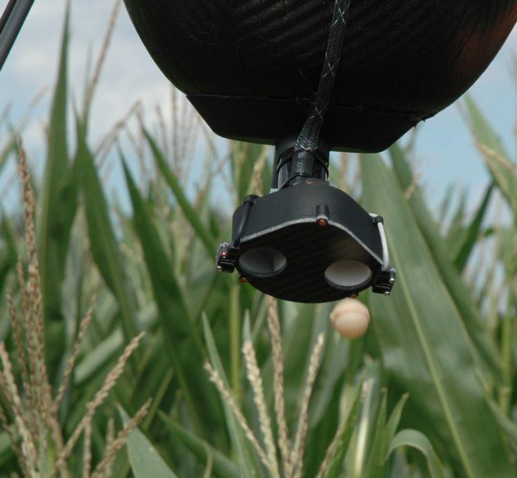 Maiszünslerbekämpfung aus der Luft