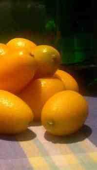 Kumquat Liqueur (Gin or Vodka) recipe