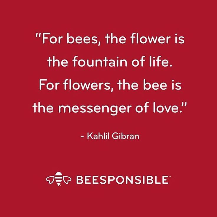 Instagram post by @beesponsible