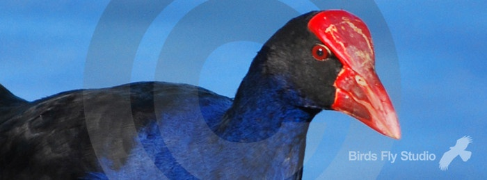 Check out www.birdsflystudio.com for this Facebook Timeline Cover