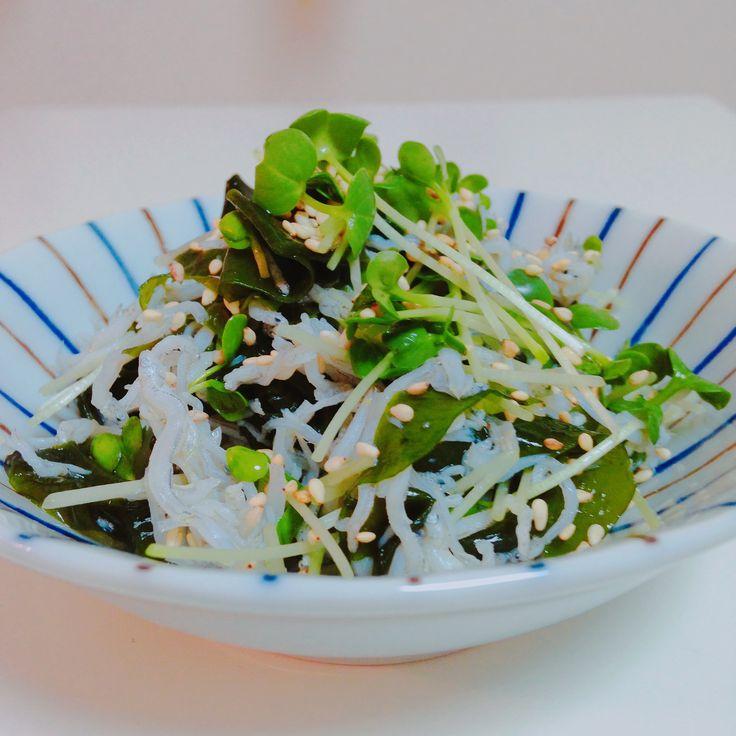 カイワレ大根、ワカメ、しらすの酢の物  Vinegary salad of white radish sprouts, wakame seaweed and boiled whitebait