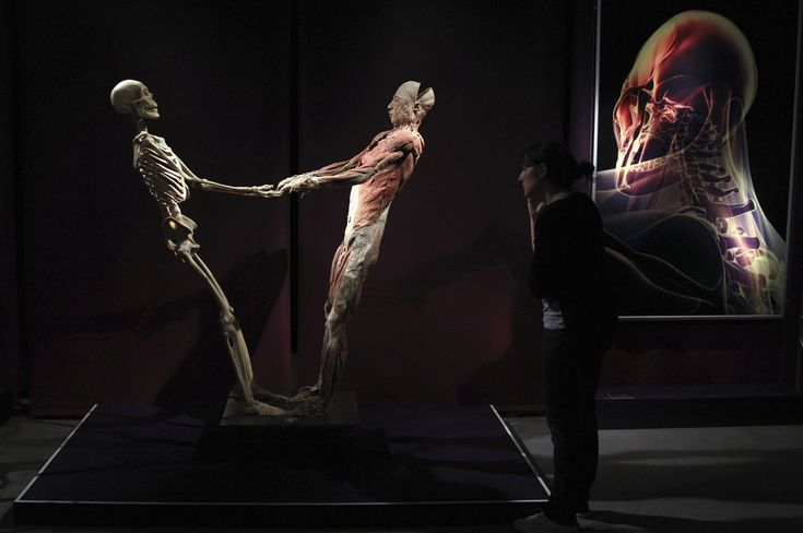 A plastinated human bodies' exhibit