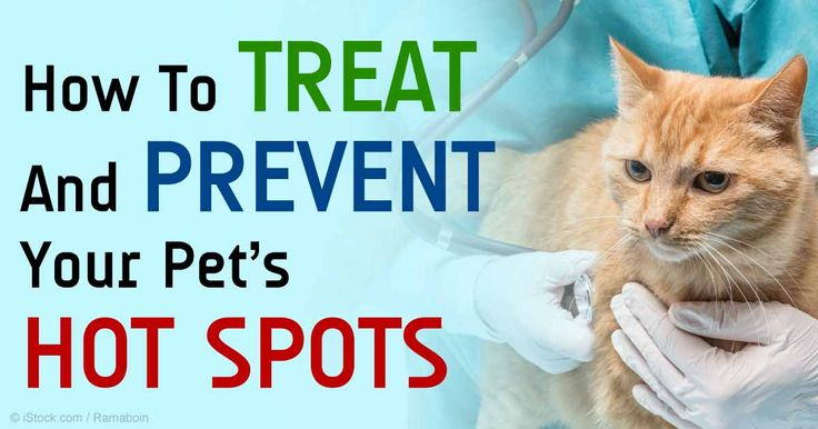 Best Way To Treat Hotspots On Dogs