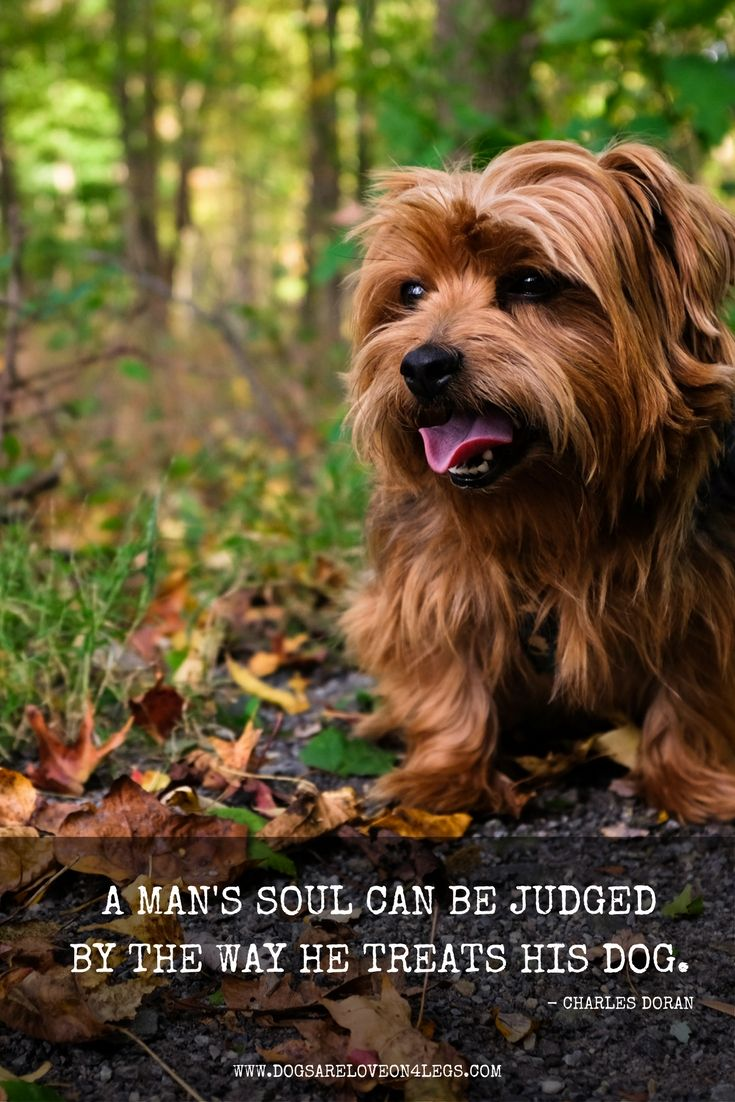 A Man And His Dog >> Dog Quote A Man S Soul Can Be Judged By The Way He Treats His Dog