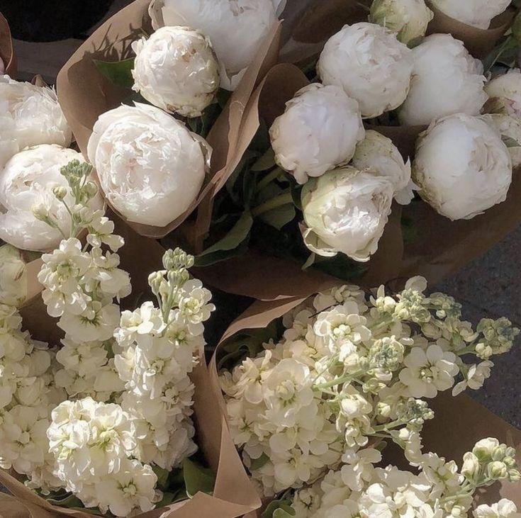 New Foto, Deco Floral, Design Blog, Flower Aesthetic, Beige Aesthetic, Summer Aesthetic, Aesthetic Fashion, My Flower, Blossom Flower