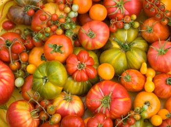 Heirloom tomato plants. Shipped direct to your door, I am so ready to get my garden in!