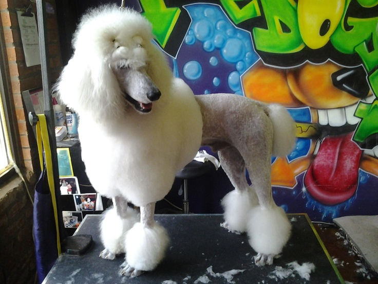 29 best the dog salon images on pinterest dog salon dog wash and charlottes favorite pet grooming salon self serve dog wash solutioingenieria Gallery