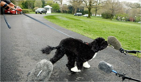 Photo of President Barack Obama's dog Bo speaking to reporters:  http://www.barack-obama-photos.com/Pictures-Obama-Dog-Bo.html