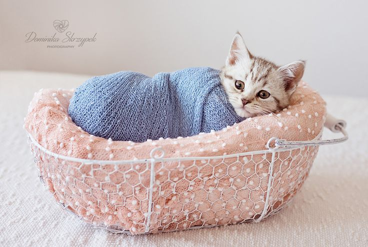 Newborn photo props. Newborn photography. Blue and rose newborn photo props. Two months old cat :) More ph otos on the blog.