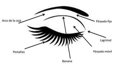 Cómo maquillar cada zona del ojo. Si eres nueva en el mundo del maquillaje, seguro que te encanta este post con las diferentes partes del ojo y cómo maquillarlas