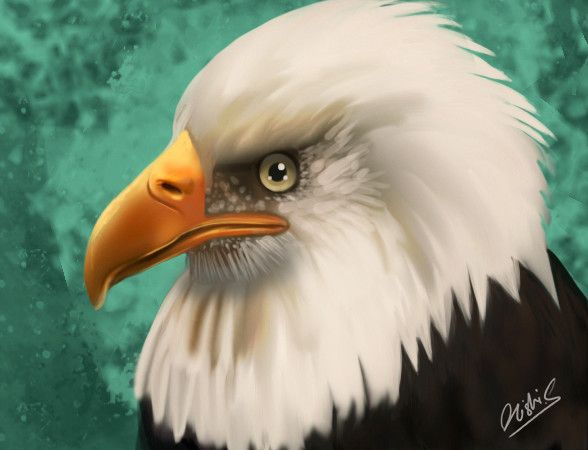 74 best eagles images on Pinterest | Paisajes, Bald eagle and Eagles