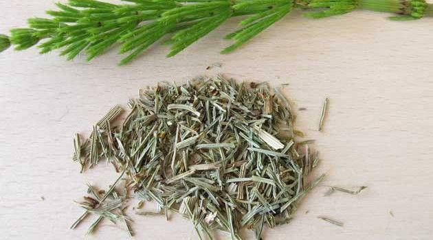 Chá de hibisco com cavalinha para emagrecer - Bolsa de Mulher