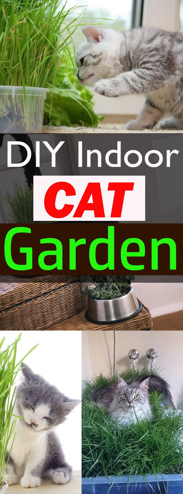Best 25 cat love ideas on pinterest cat things mom cat for Indoor gardening with cats